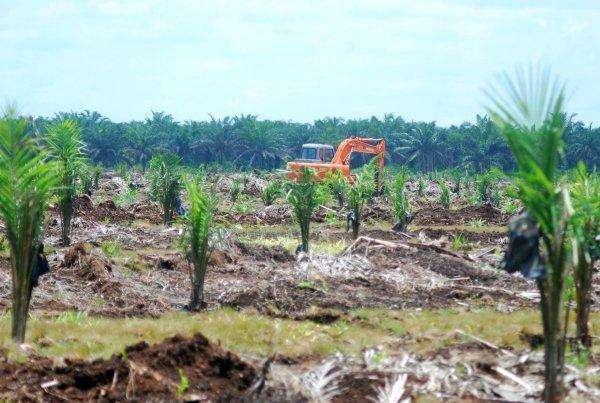 KEBUN SAWIT- Sebuah buldozer tengah melakukan pembukaan lahan sawit dengan meratakan tanah di lahan perkebunan sawit Kabupaten Sintang,Kalimantan Barat, Selasa (2/3).