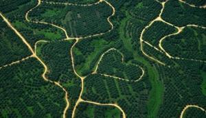 Perkebunan kelapa sawit. ANTARA/Zabur Karuru