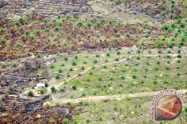 Sebagian Taman Nasional Tesso Nilo (TNTN), Riau, yang mulai ditanami kelapa sawit setelah dibakar oleh perambah pada foto (9/9/2013). (ANTARA FOTO/Iskandar)