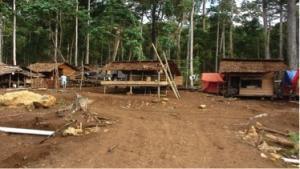 kamp buruh saat pembibitan